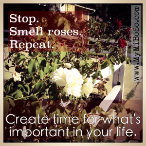 Stop, Smell roses, repeat
